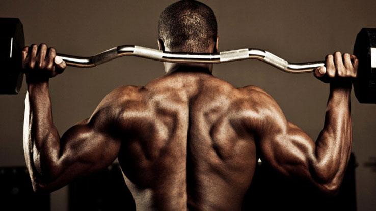 Katabolisme og anabolisme i muskeludvikling